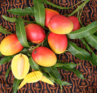 Fairchild's Mango Festival offers discounts to its popular event