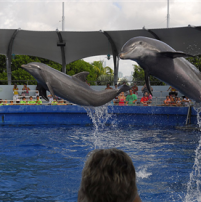 Miami Seaquarium's Black Friday specials