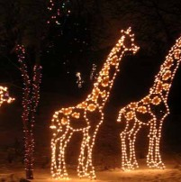 Zoo Lights at Zoo Miami