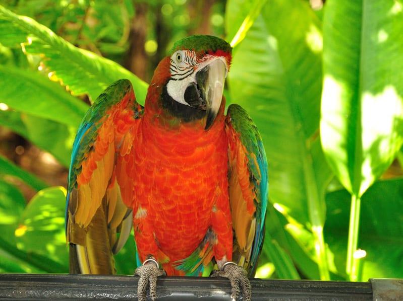 Parrot jungle coupons 2018