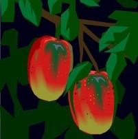 mangoes.jpg