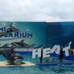 Heat fans discount at Seaquarium