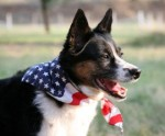 Tips for July 4th pet safety