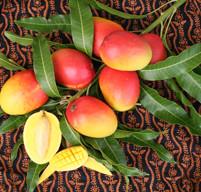mango festival 2