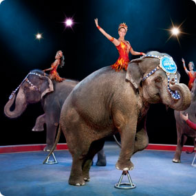 Ringling-Brothers-Circus-built-to-amaze