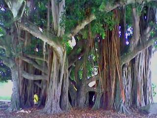 C Grove tree